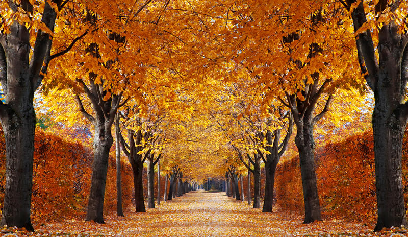 осень переулка стоковые фото