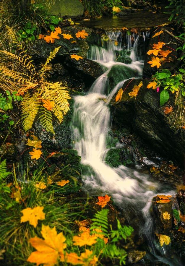 Осень потока im леса стоковая фотография rf