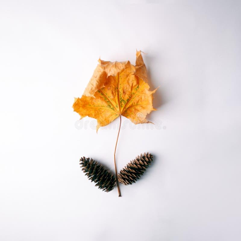 Осень приезжает Предпосылка падения, идея проекта Плоское положение Минимальная предпосылка Кленовый лист и конусы Yelllow на бел стоковая фотография
