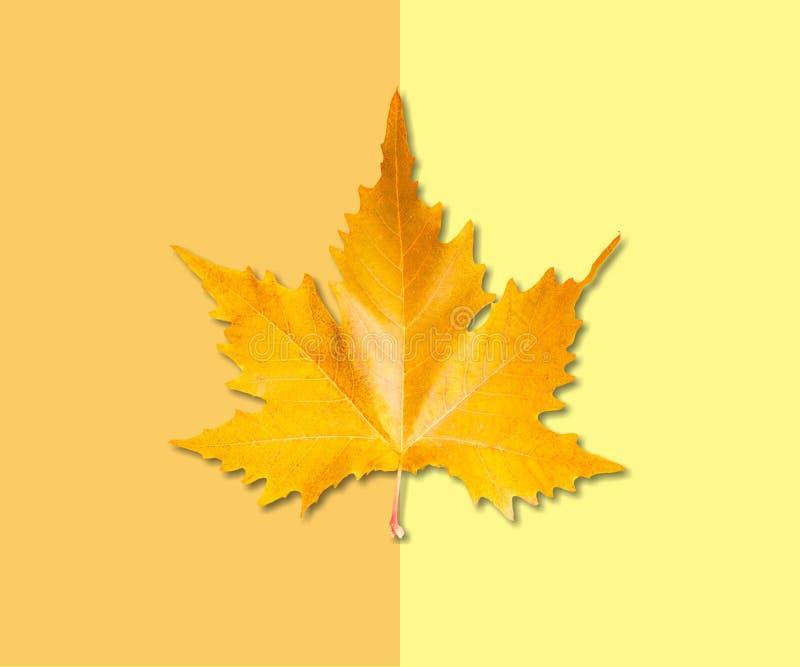 Осень приезжает стоковые фото