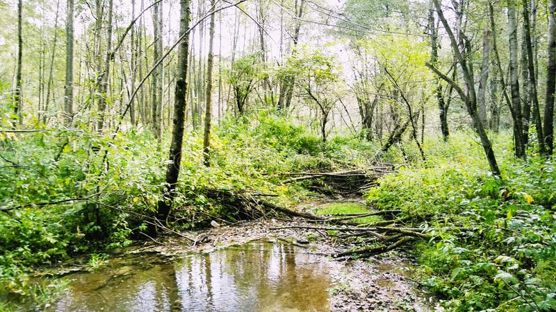 Осень приходит скоро вне окон ландшафт леса стоковое фото rf