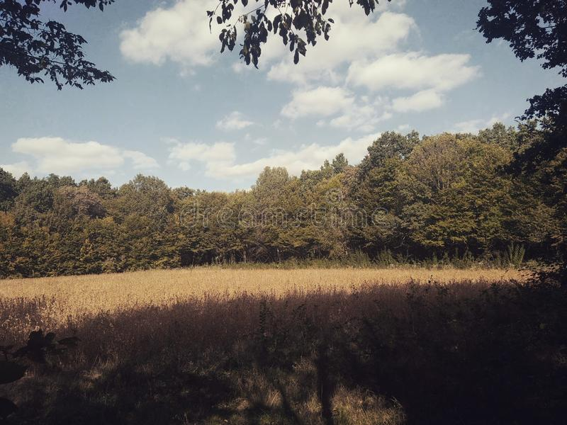 осень раньше стоковая фотография