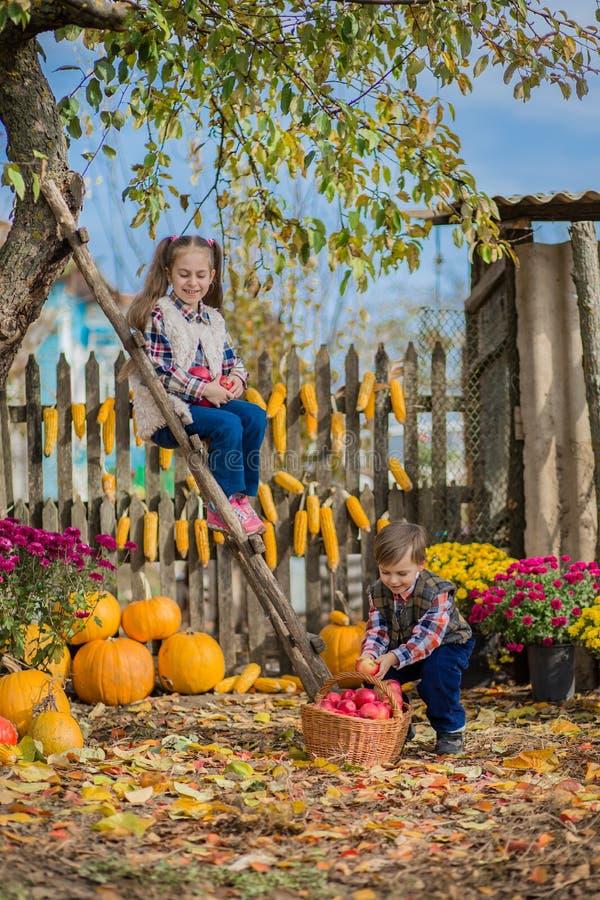 Осень собирая яблоки на ферме Дети собирают плод в корзине потеха ягнится напольное стоковая фотография