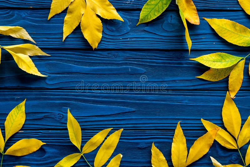 осень содержит путь листьев рамки архива Желтые и зеленые листья на границах на голубом деревянном космосе экземпляра взгляд свер стоковая фотография rf