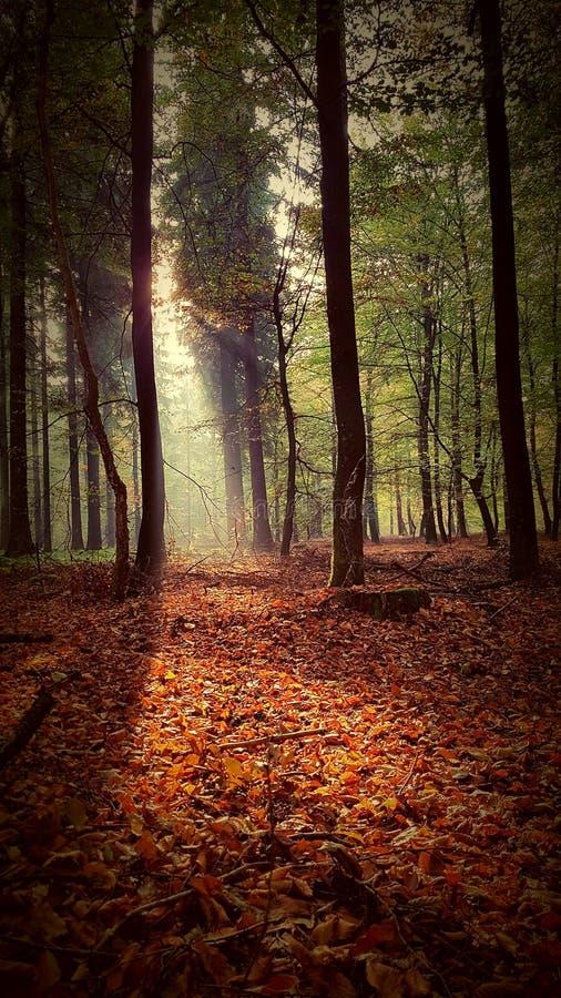 Осень Солнце стоковое изображение
