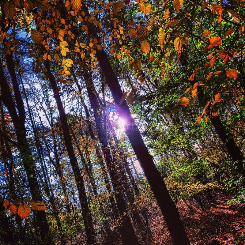Осень Солнце стоковое фото rf