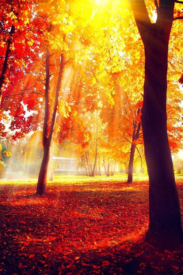 Осень Сцена природы падения осенний парк стоковые изображения rf