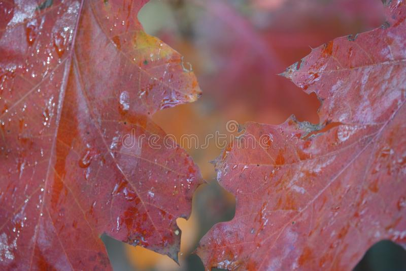 Осень с покрашенными листьями стоковая фотография rf