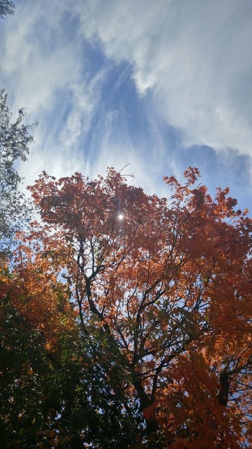 Осень тепло стоковые изображения rf