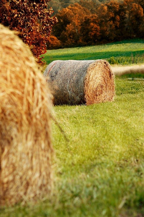 осень тюкует сено стоковые изображения rf