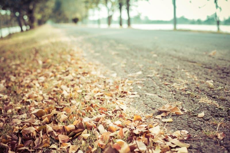 Осень, упаденные листья стоковые фотографии rf