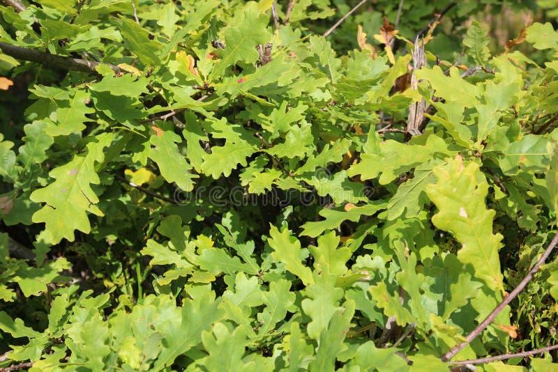 осень цветастая Природа сезоны Красивое дерево осени с упаденными сухими листьями стоковое изображение rf