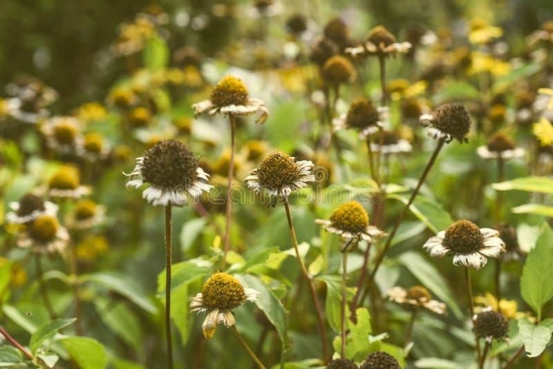 Осень цветет в саде в заходящем солнце, годе сбора винограда стоковое изображение rf