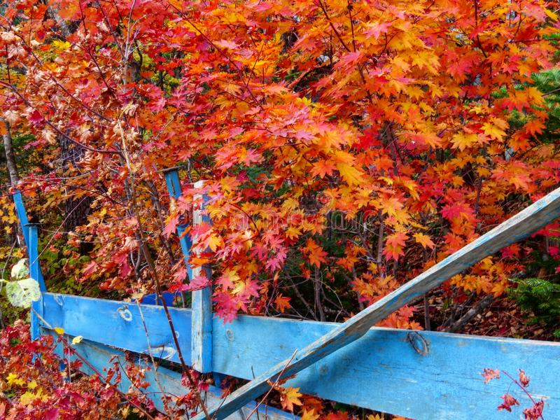 Осень чудесна стоковая фотография