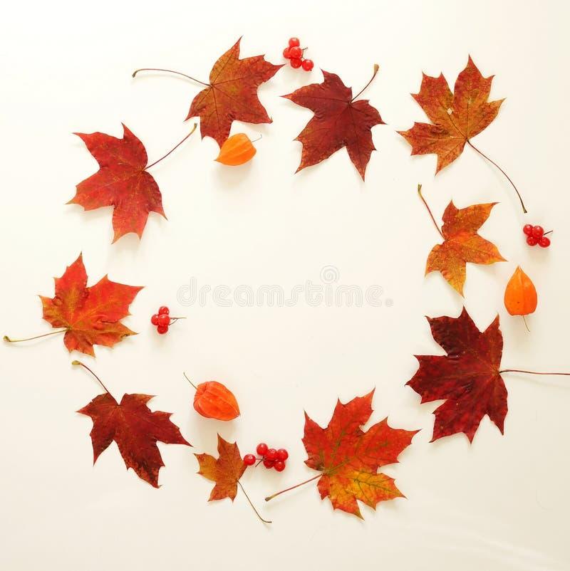 осень яблока миражирует листья состава сухие sacking ваза Рамка листьев осени, жолудь, конусы сосны на белой предпосылке стоковое изображение rf