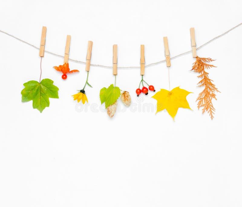осень яблока миражирует листья состава сухие sacking ваза стоковые изображения rf