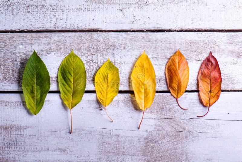 осень яблока миражирует листья состава сухие sacking ваза Различные красочные листья красивейшие детеныши женщины студии съемки т стоковое фото rf