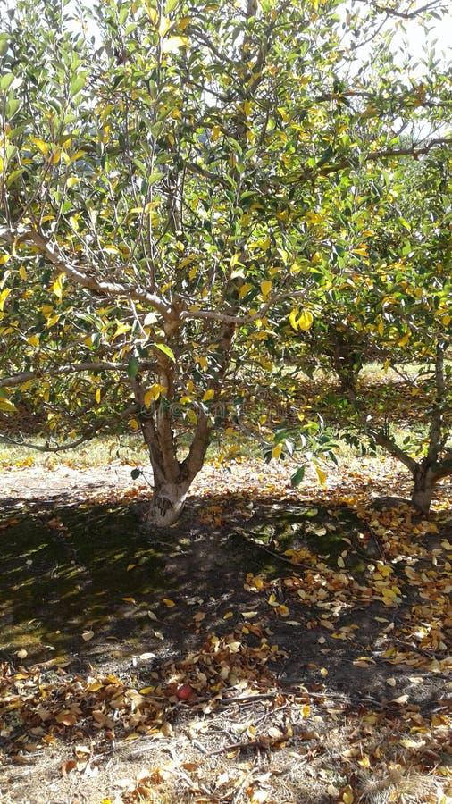 Осень стоковое изображение rf