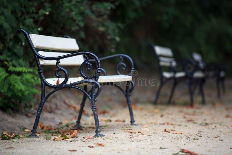 осень benches пейзаж парка стоковое фото