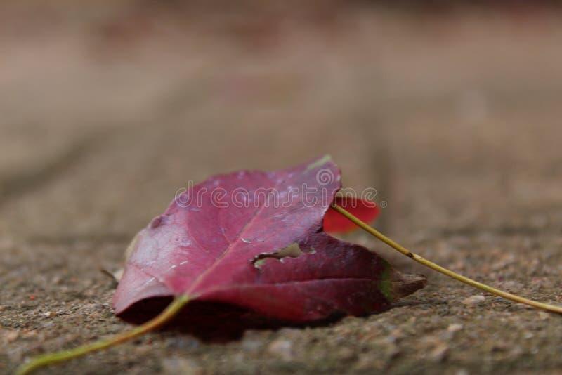 Осень Blooded стоковое изображение rf