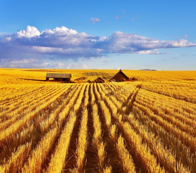 осень fields полдень Монтана стоковые изображения rf