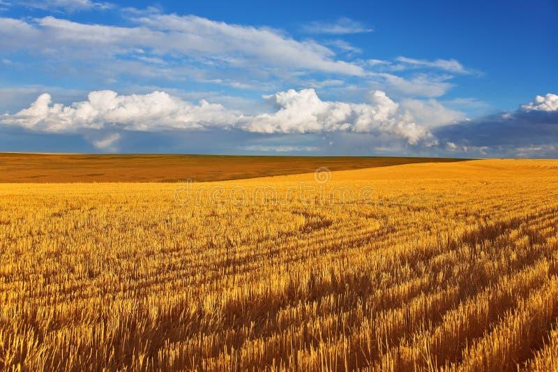 осень fields полдень солнечный стоковые изображения