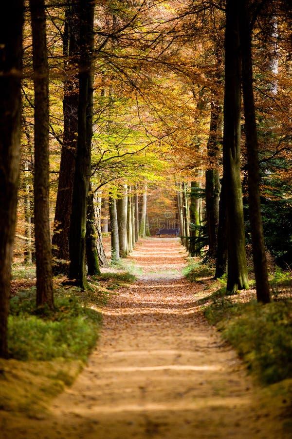Осень Forrestpath стоковая фотография