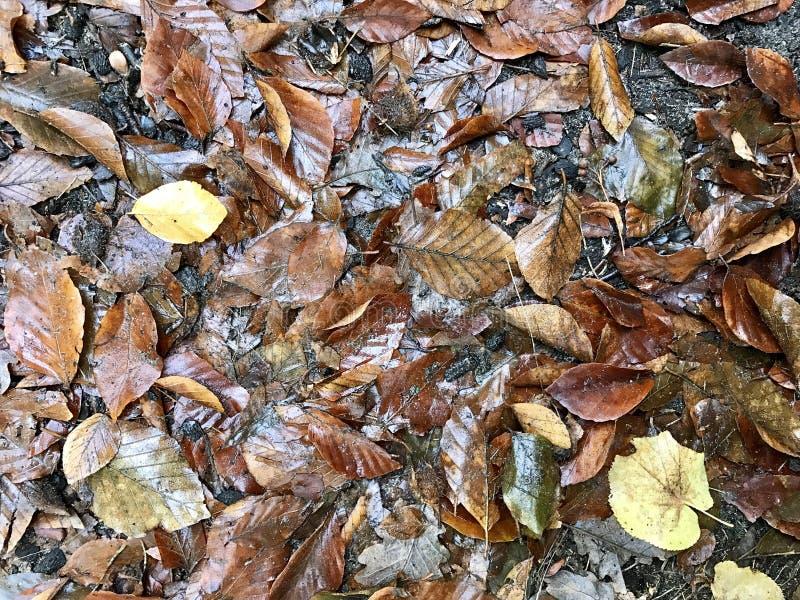 Осень Leeves на поле леса стоковая фотография rf