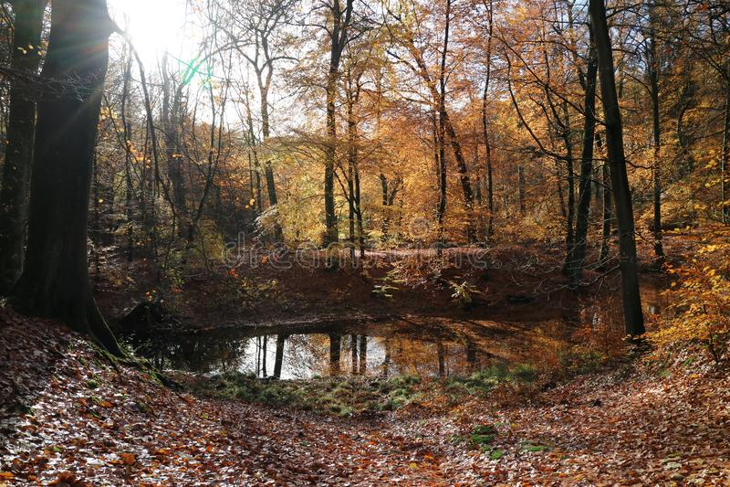 Осень Veluwe стоковые фото