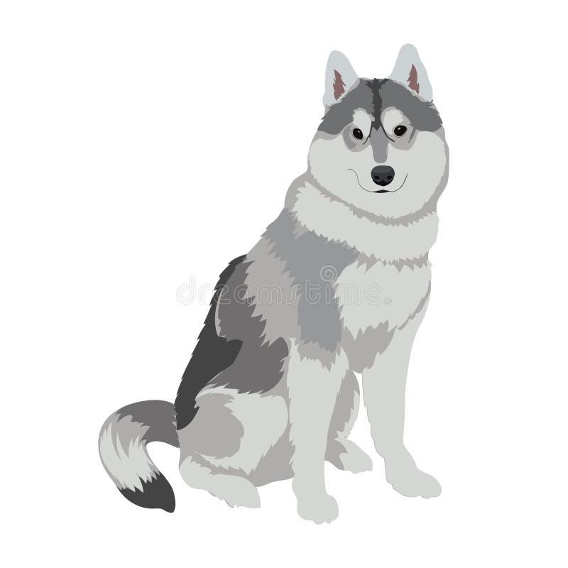 Осиплое усаживание собаки изолированное на белой предпосылке иллюстрация штока