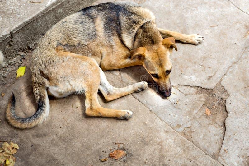 Ослабленная бездомная собака от укрытия выслеживает homeless Селективный фокус стоковые фотографии rf