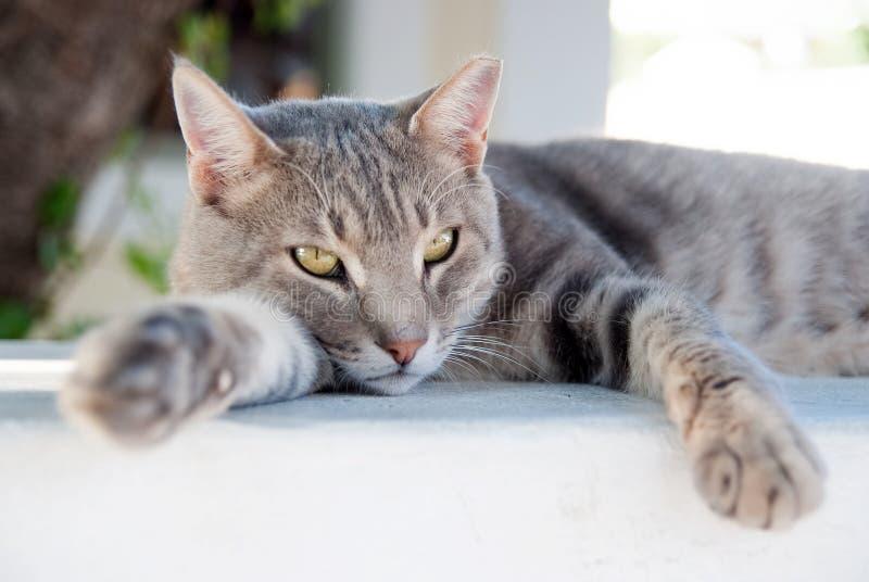 ослабьте Кот Shorthair ослабляет в Patmos, Греции еда ломтей кота свежая Здоровый любимчик - счастливое предприниматель Кот с зел стоковое фото