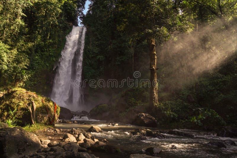Ослабьте с кокосом в Бали стоковые изображения rf