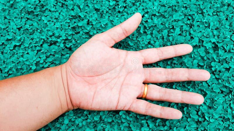 Ослабьте с рукой на предпосылке травы цвета teal, triflo desmodium стоковое фото