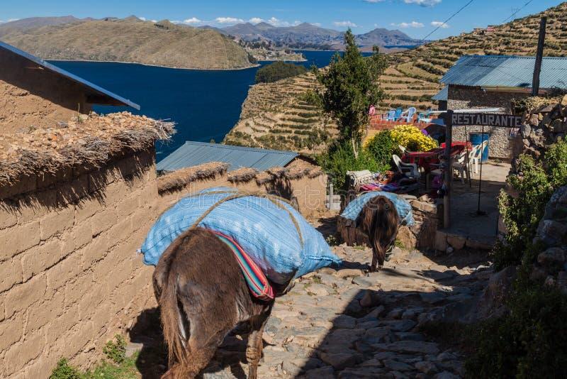 Ослы в деревне Yumani стоковое фото