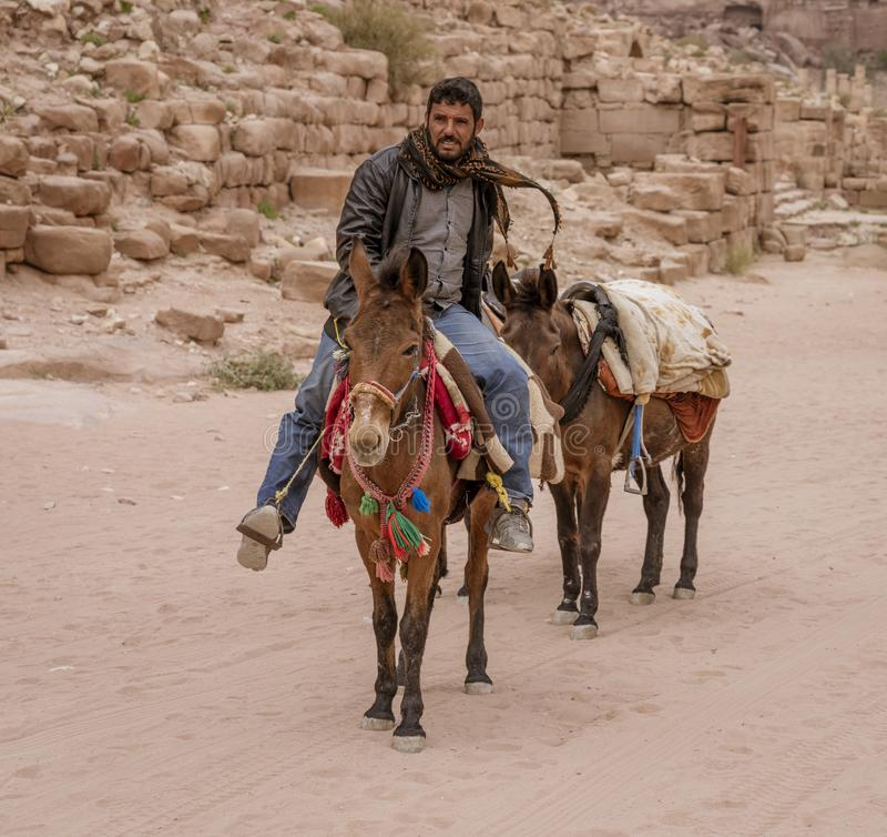 Ослы общие животные перехода в Petra Джордан стоковая фотография rf