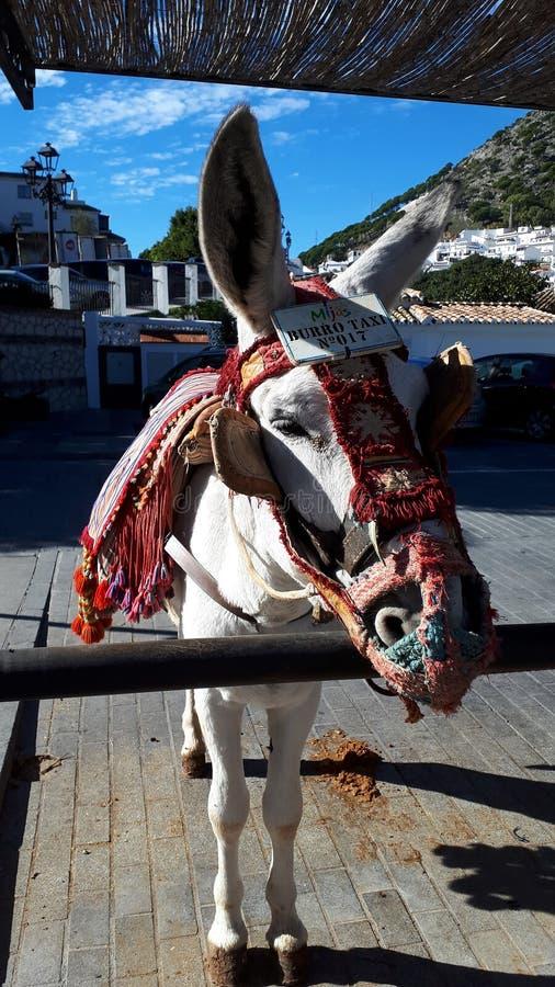 """Ослы Mijas который одна из самых красивых """"белых """"деревень южной области Испании вызвали Андалусию стоковая фотография"""