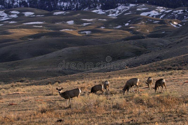 осляк ландшафта оленей стоковые фото