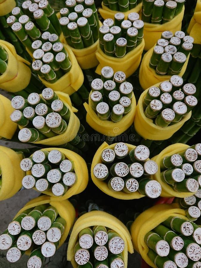 Основание braunil Dracaena стоковая фотография rf