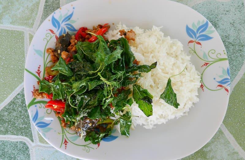 Основной пищевой продукт Таиланд, базилик стоковое фото rf