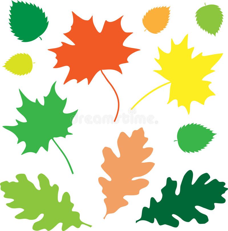 основные листья иллюстрация вектора