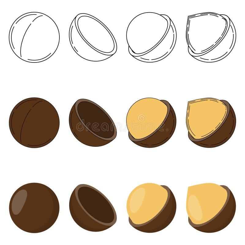 Set of macadamia nuts in three styles vector illustration