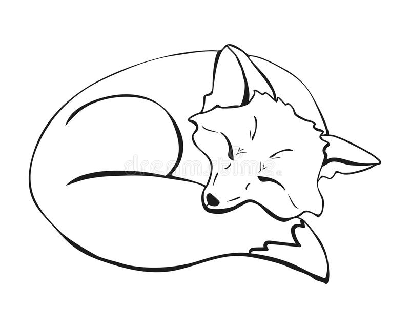 A cute sleeping fox. a fox lying with closed eyes curled up and laid its face on its tail vector illustration stock illustration