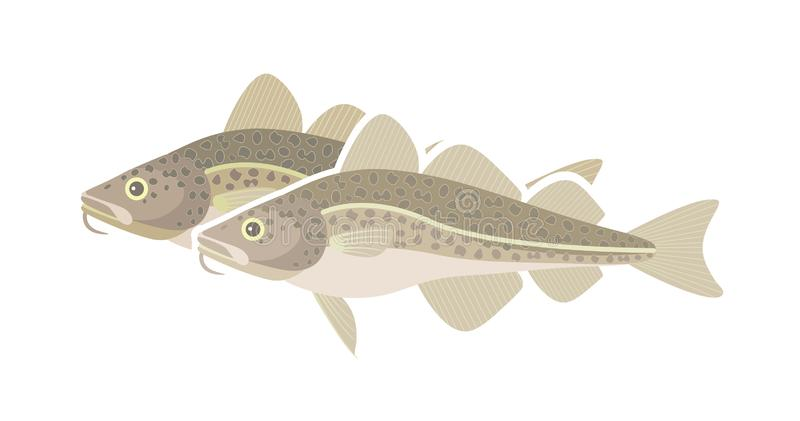 Atlantic cod logo. Isolated cod on white background royalty free stock photography