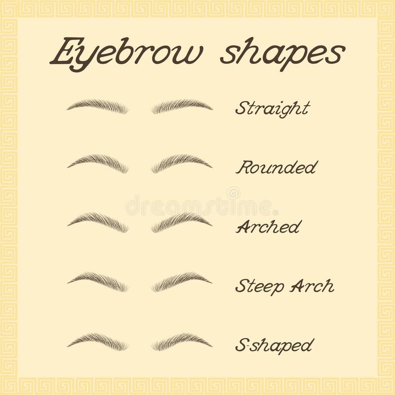 Various types of eyebrows royalty free illustration