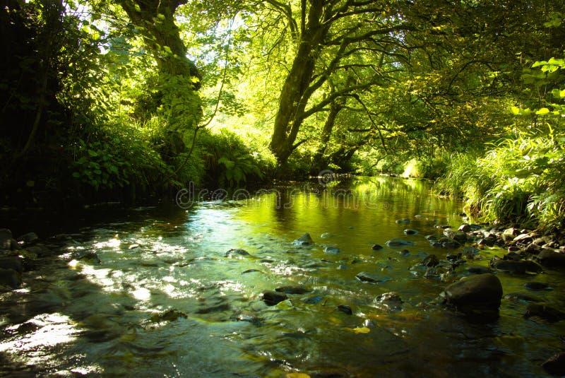 Основывает Бек в лесе Gisburn стоковая фотография rf