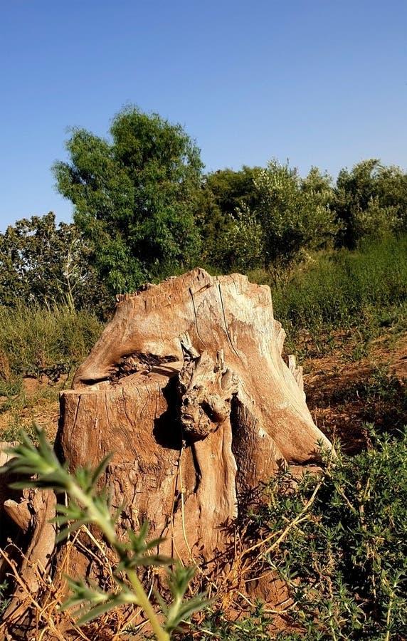 Остатки мертвых деревьев стоковое изображение