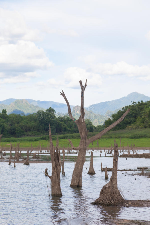 остатки мертвых деревьев стоковые фотографии rf