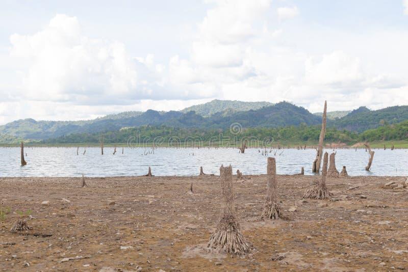 остатки мертвых деревьев стоковые изображения rf