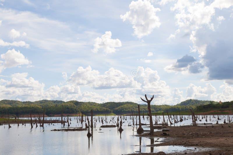 остатки мертвых деревьев стоковая фотография